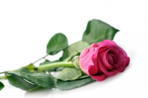 Significado color de las rosas