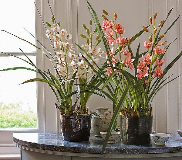 flores con encanto
