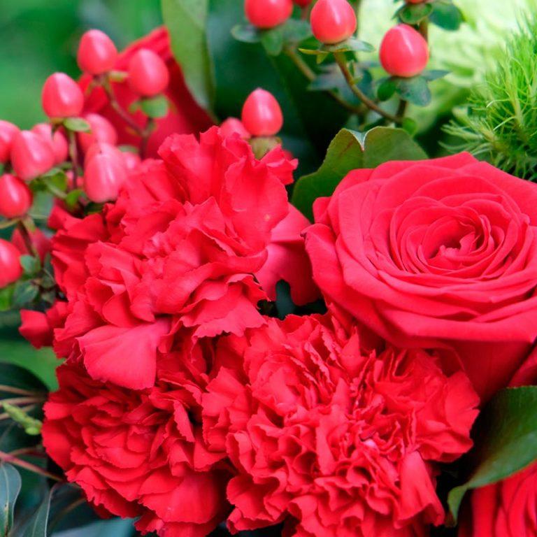 claveles o rosas