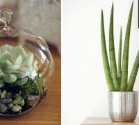plantas que necesitan menos agua