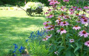 cuidar las plantas en verano