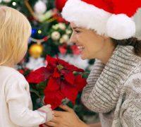 las mejores flores y plantas para regalar en Navidad