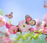 por qué salen más flores en primavera