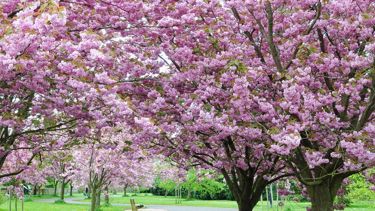 campos de flores más bellos de España en primavera