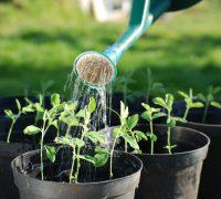 regar las plantas en verano