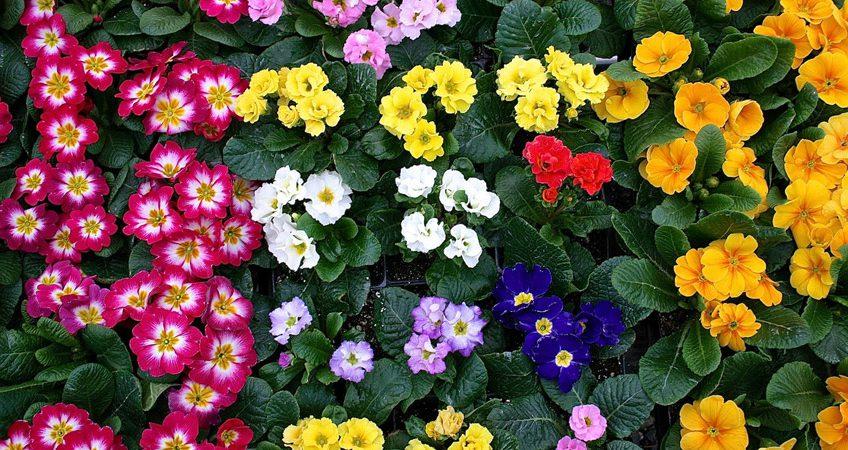 qué flores plantar en otoño