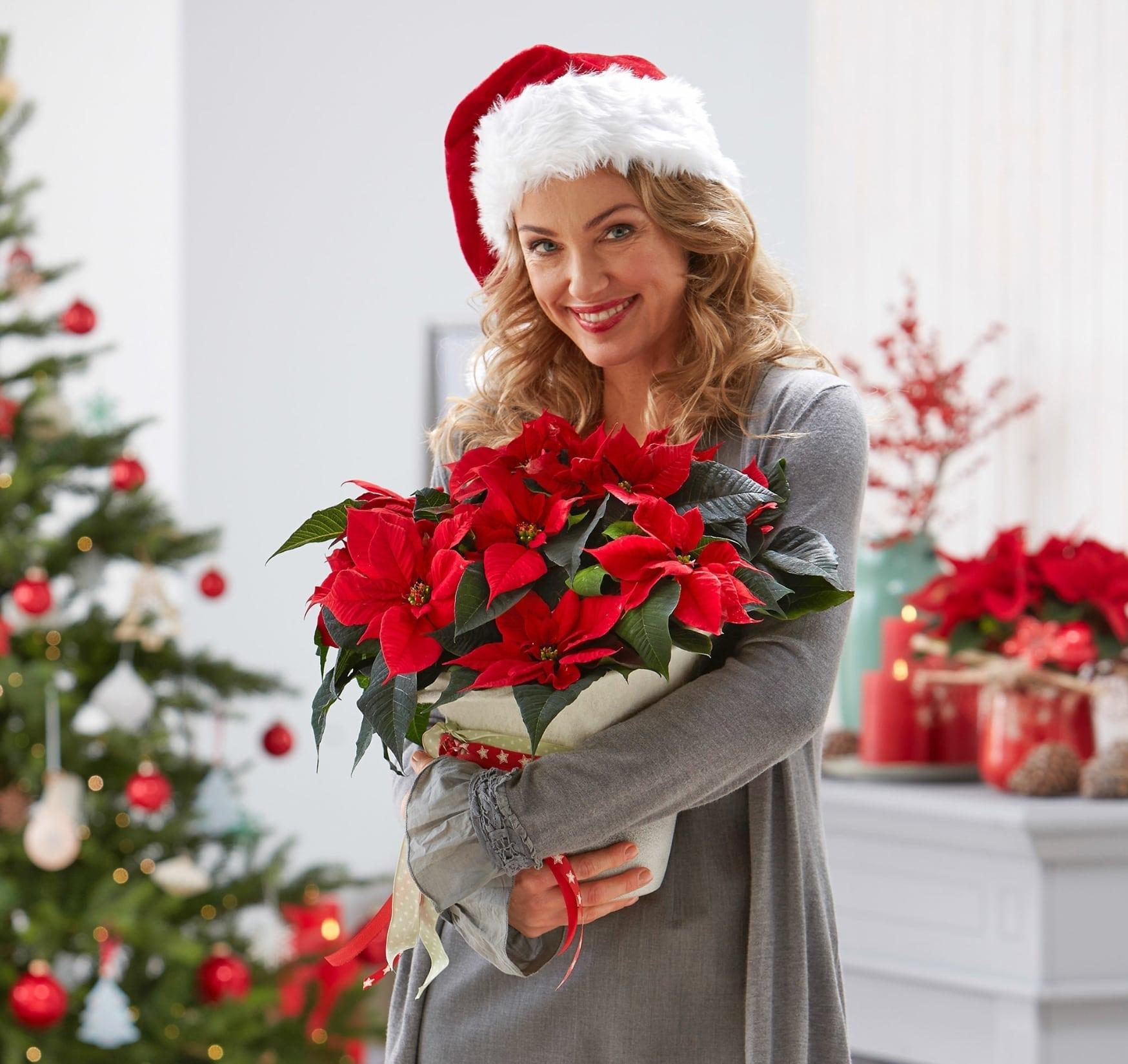 flores a domicilio para Navidad