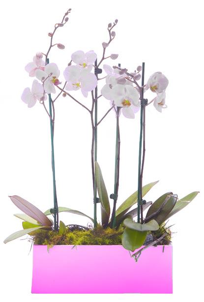 Centro de orquídeas Belén