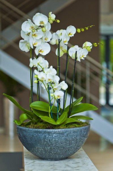 Centro de orquídeas Aroa
