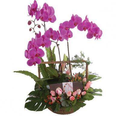 Centro de orquídeas Rosa