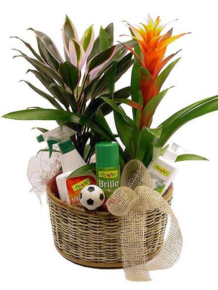 Cesta de plantas y productos de cuidados