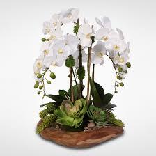 Centro de orquídeas Marilina