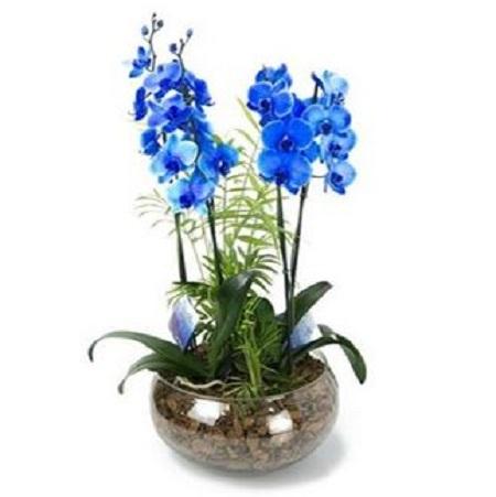 Centro de orquídeas Fantasía