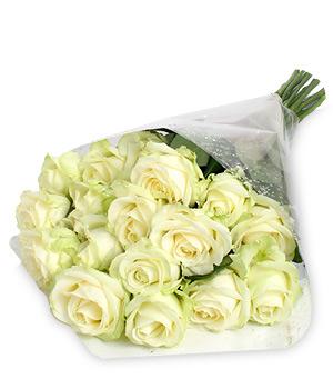 Pack de rosas Cynthia