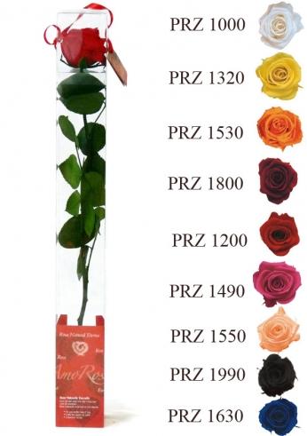 Rosas eternas Arshen