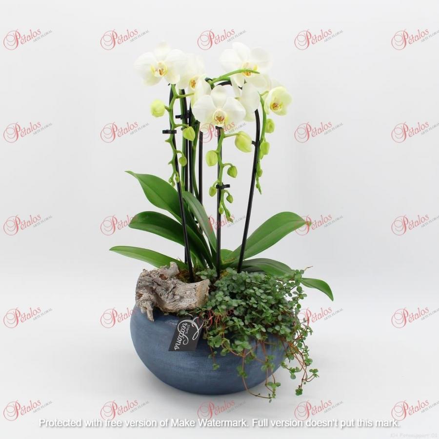 Centro de orquídeas Marco