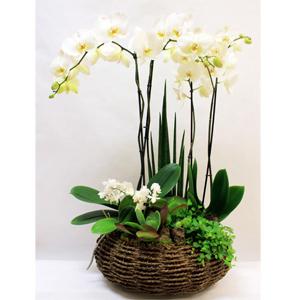 Centro de orquídeas Leonora