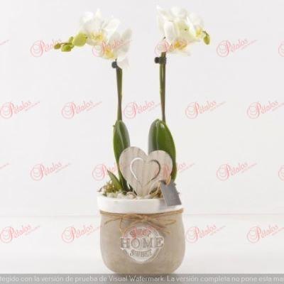 Orquídea Eloisa