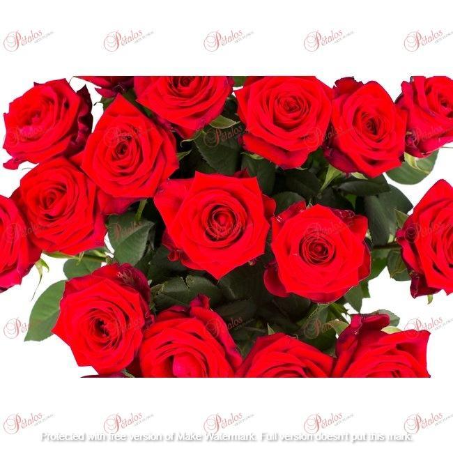 Pack 12 rosas Jamaica