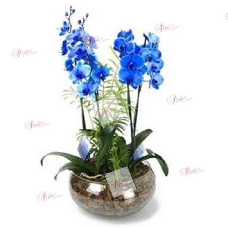 Centro de orquídeas Celeste